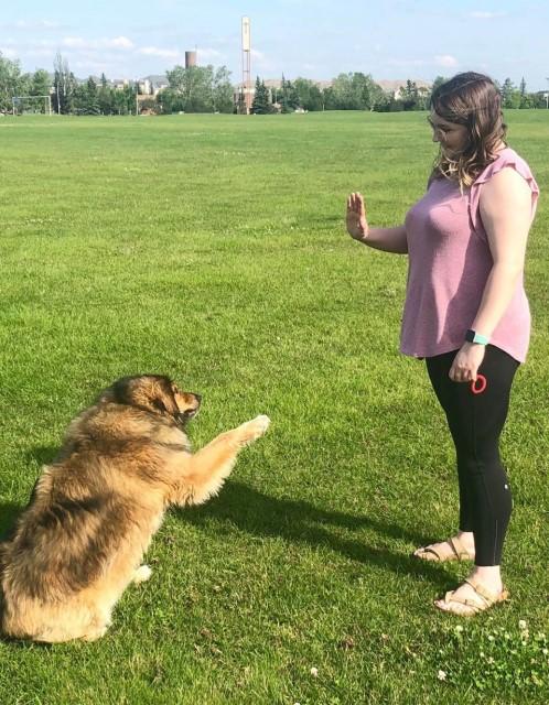 Cassie Sontag - Dog Trainer